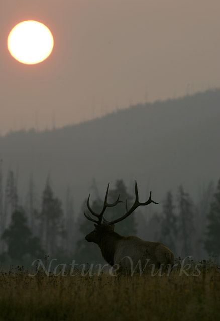 My Favorite Images / Sunrise over Elk