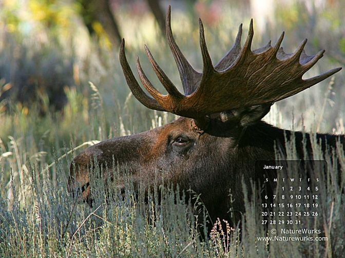 Click to Download NatureWurks January 2013 Wallpaper Calendar