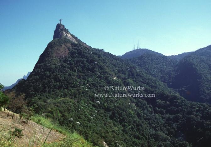 Rio-Statue-Afar