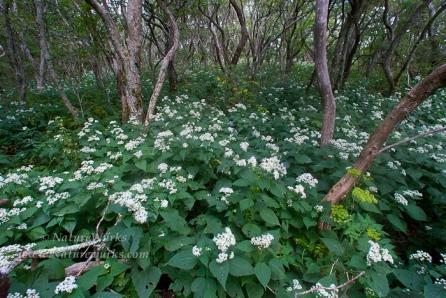 Lane Pinnacle Craggy Gardens Blue Ridge Parkway