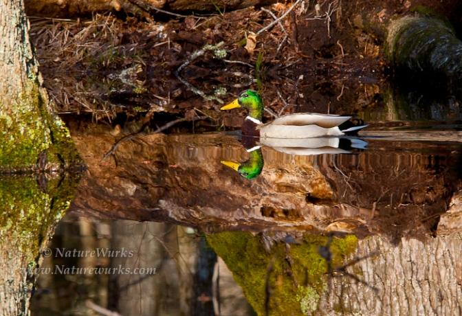 NatureWurks/Pat Cocciadiferro