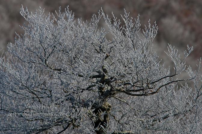 _C6B5820-RimIce_TREE_13_OUT