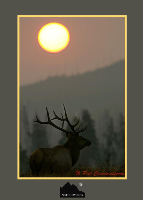 elk_bull_sunrise_kkm
