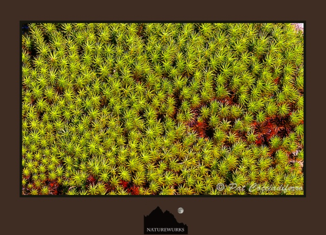 Moss_KU8S0525.jpg
