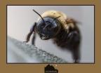 Bumblebee Eye to Eye