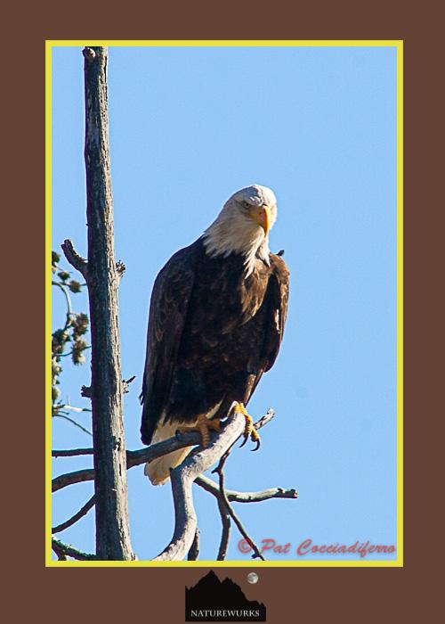 eagle_10_c6b2708